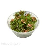 30105 DasModel Flowering shrub, pink 8 mm/30 pcs.