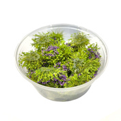 30104 DasModel Flowering shrub, purple 8mm/30 pcs.