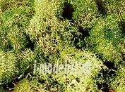 3217 Heki Материалы для диорам Исландский мох, серо-зеленый 30 г