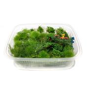 N05 DasModel Набор растений, кочек, кустарников для ландшафта (лето)