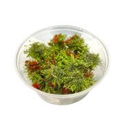 30103 DasModel Flowering shrub, red 8 mm/30 pcs.